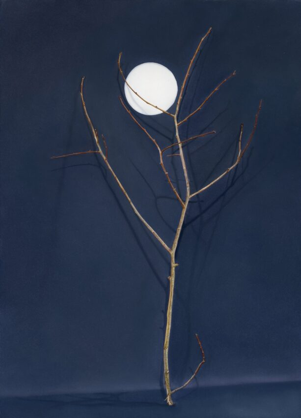 'Tree with cut-out moon' image