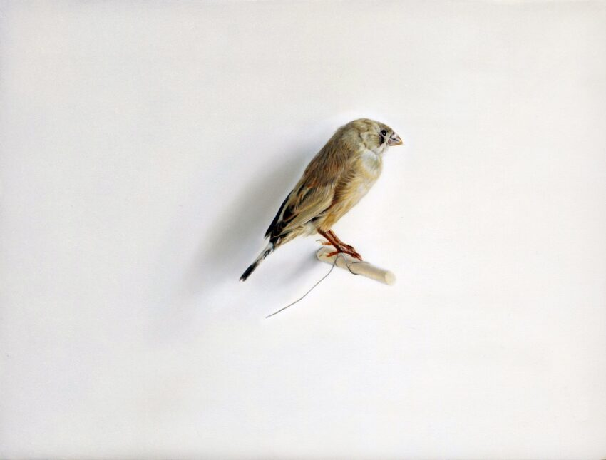 'Bird' image