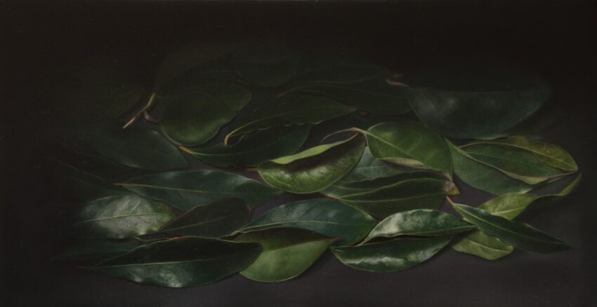 'Box of Leaves' image